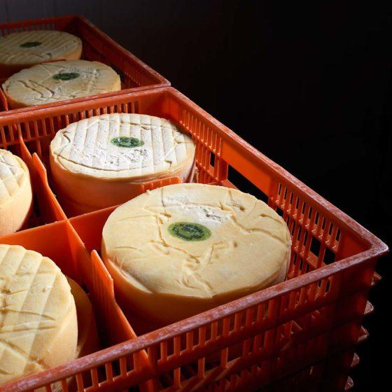 Collecte des fromages directement auprès des producteurs